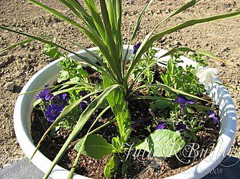 JRB flower pot2