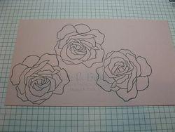 JRB rose tut1