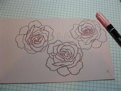 JRB rose tut2