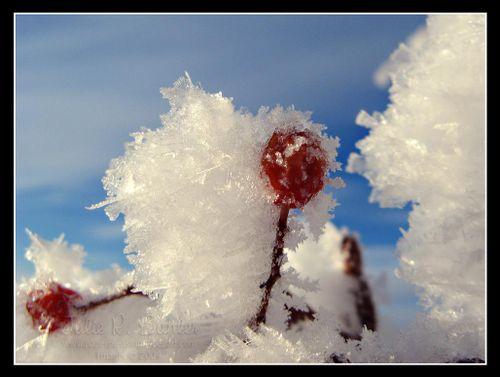JRB framed hoar frost 1