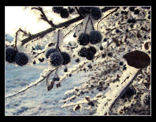 JRB hoar frost 3