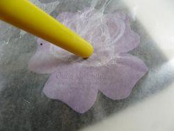 JRB anemone tut 8