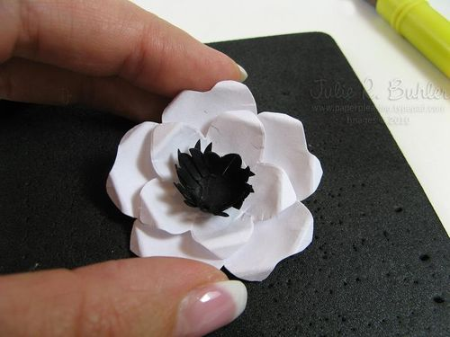 JRB finished anemone 2