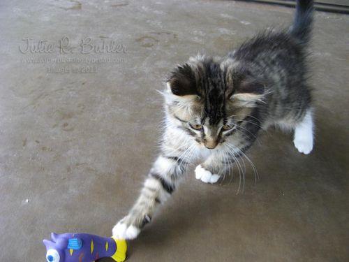 JRB kitty