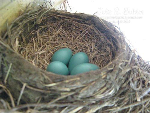 JRB robin eggs