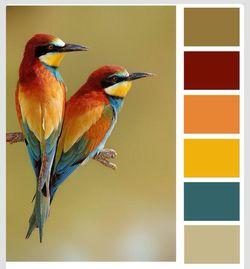 Birds challenge