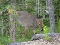 Jrb_feed_deer1_2
