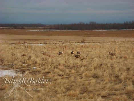 Jrb_deer_smaller